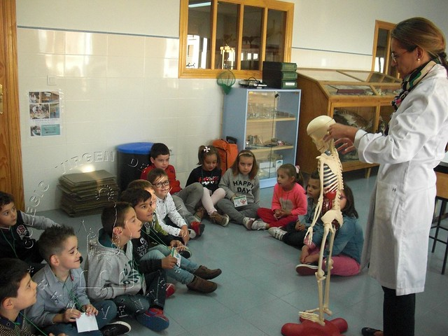 LABORATORY: BONES AND MUSCLES (1ºA)