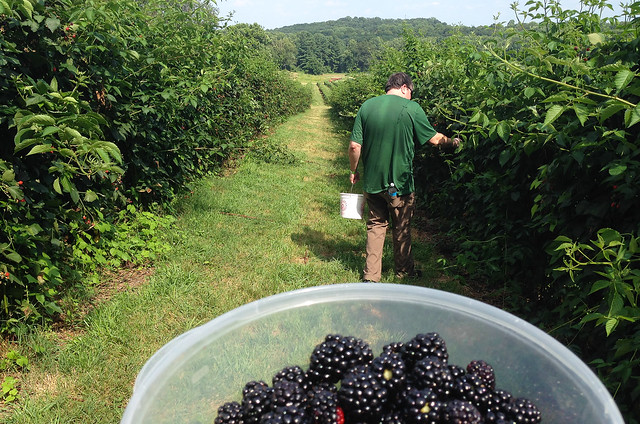 summer of blackberries