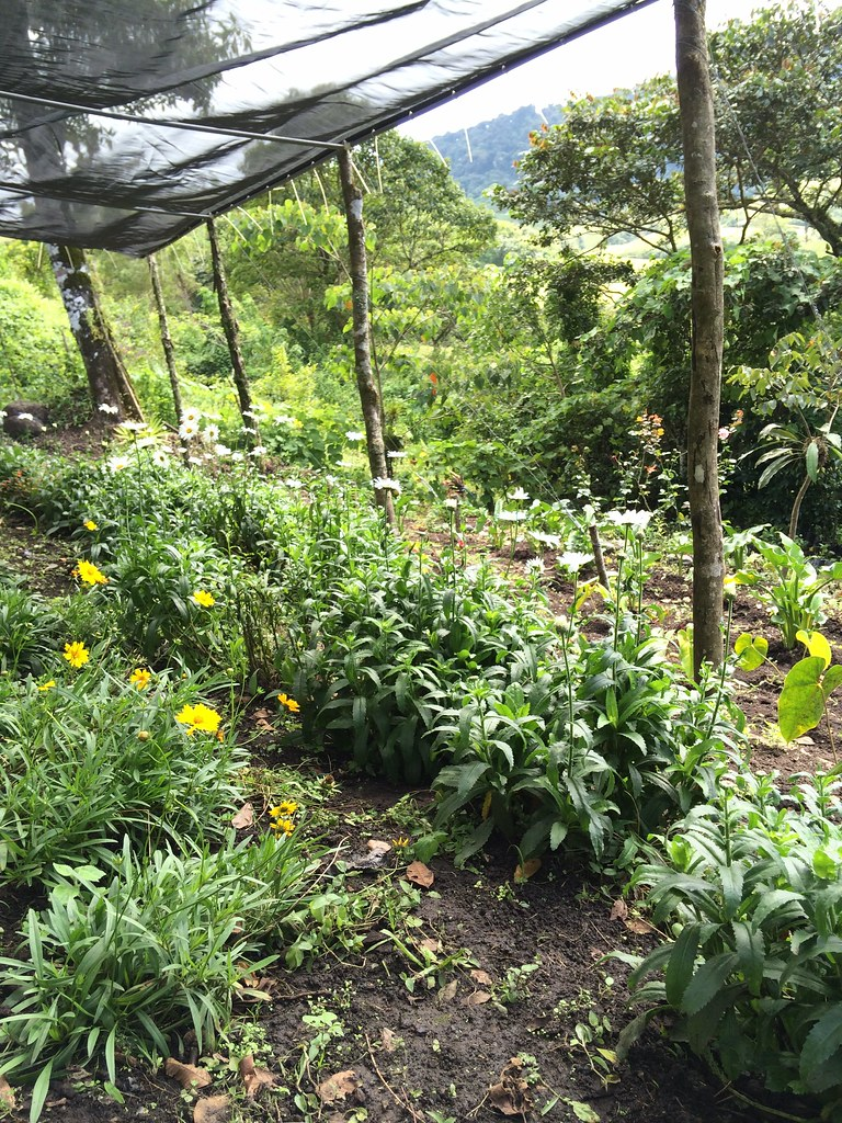 Flower Farms On Long Island