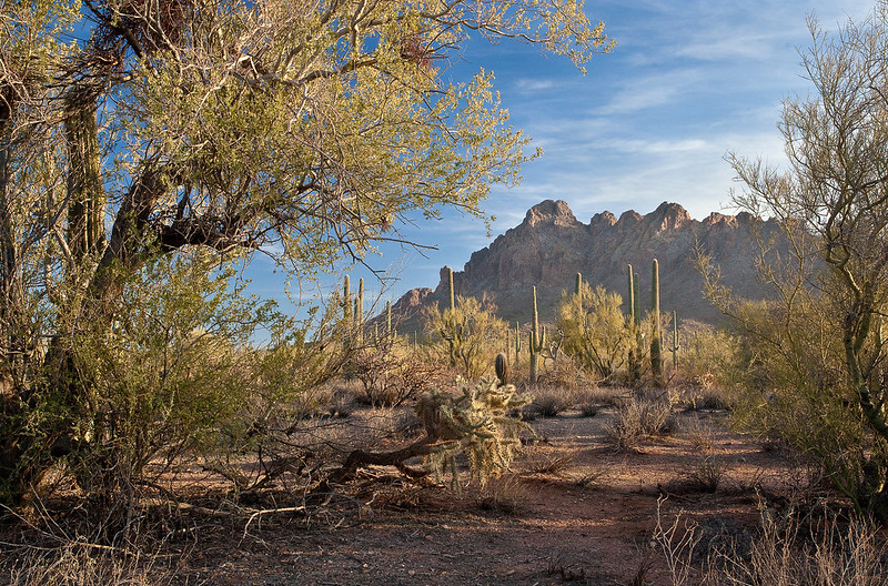 BLM Winter Bucket List #10: Ironwood Forest National Monument, Arizona, for Mild Temperatures and Winter Photography