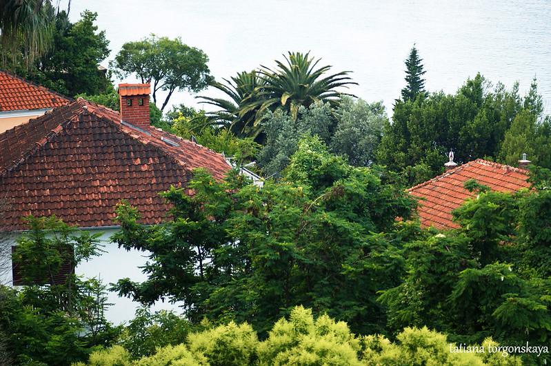 Крыши домов среди зелени