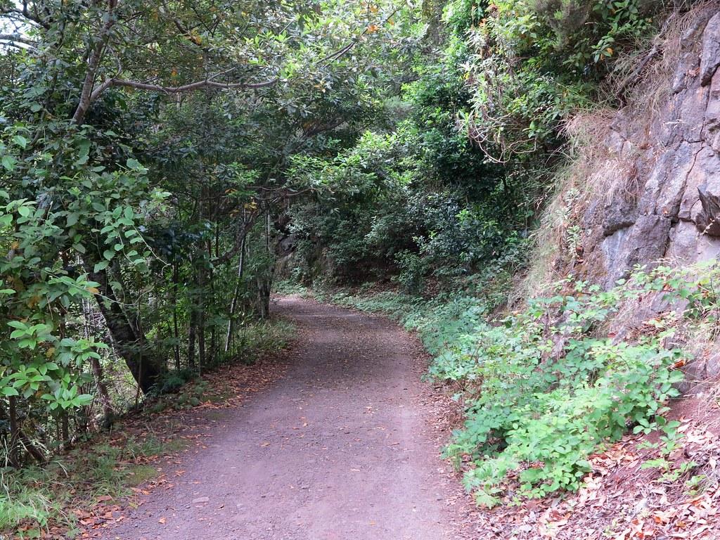 Camino por el Monte del Agua