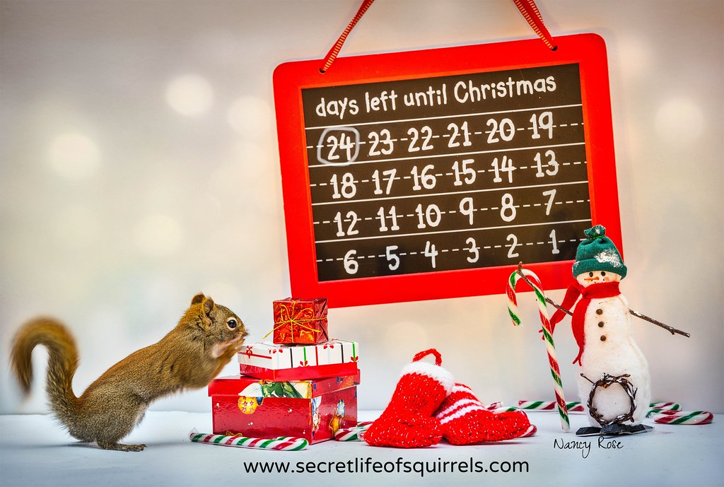 by nancy rose 24 days left until christmas by nancy rose