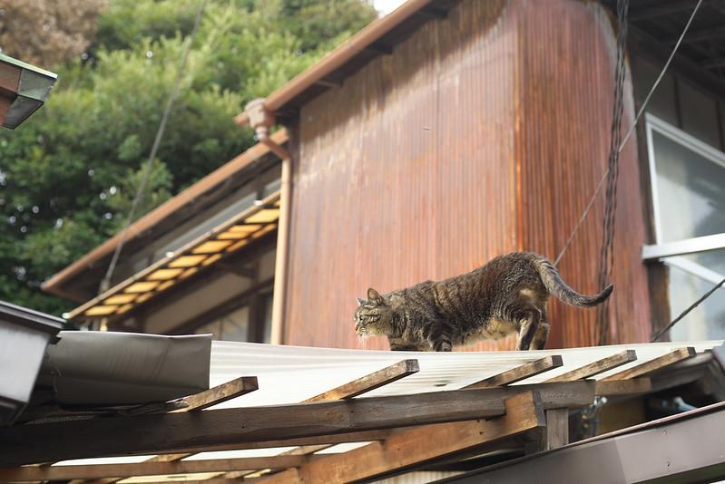 東京路地裏散歩 上野のネコ 2016年7月16日