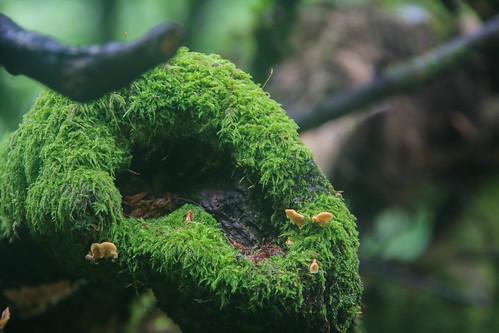 Parque Natural de #Gorbeia #DePaseoConLarri #Flickr - -881