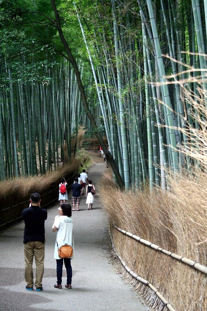 Bosco Di Bamb.Arashiyama Il Bosco Di Bambu Maya Flickr