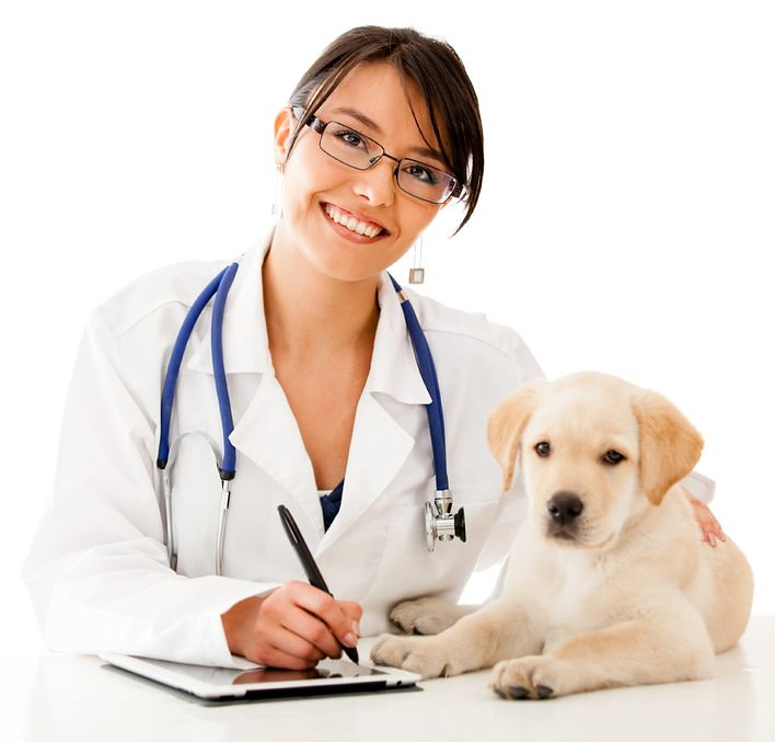 Image result for Veterinary