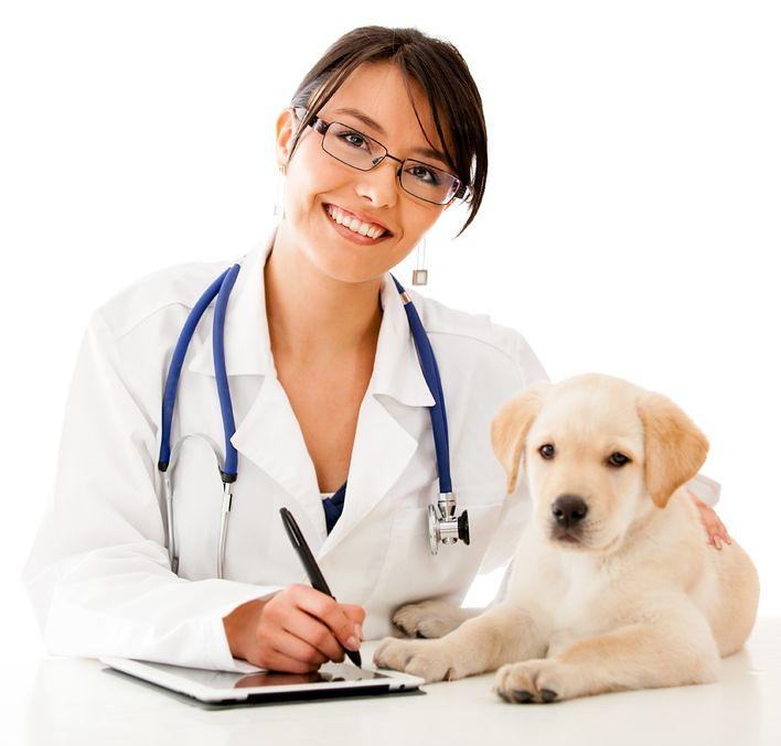 Image result for vet