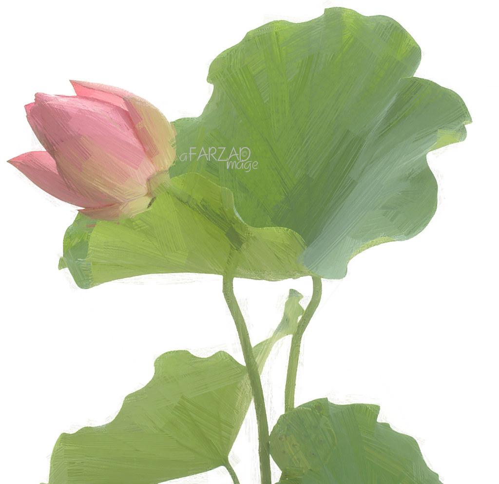Lotus flower paintings photographic images using akvis o flickr lotus flower paintings photographic images using akvis oil paint filter by bahman farzad izmirmasajfo