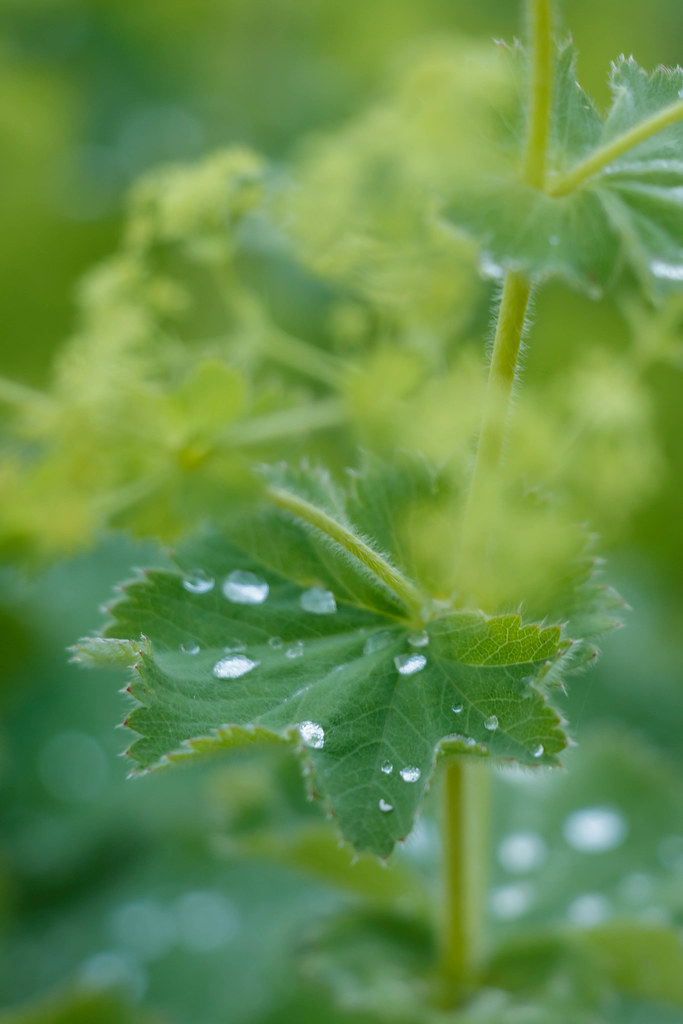 rain drops in the garden