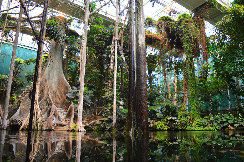 Flooded Forest in CosmoCaixa