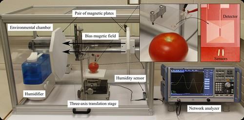 Measurement setup for direct pathogen detection on food