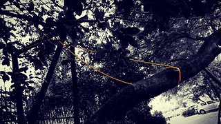 Tie a yellow rope around the old unspecified tree if you still love me... #rope, #sturdy, #holdingon, #support, #preventivemeasures, #monsoon, #remindsmeofasong, #jugaad, #Mumbai | by nupurbarua