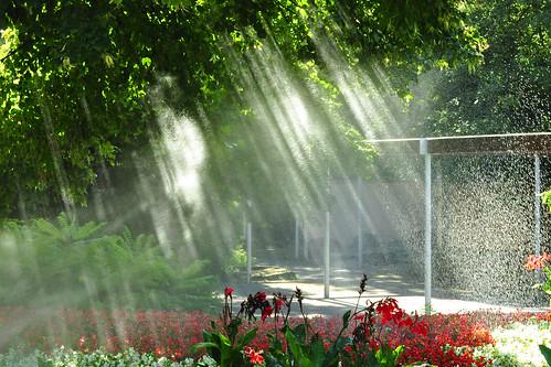 Es ist ein warmer August-Morgen im Herzogenriedpark in Mannheim. Es wird fleißig gegossen, gespritzt und gewässert. Ein erfrischender Duschregen für Pflanze, Tier und Mensch. Auf Brille und Kameraobjektiv muss man halt ein bisschen aufpassen. Dafür ergibt der feine Sprühnebel in den frühen Sonnenstrahlen ein hübsches Bild. - Fotos und Collagen: Brigitte Stolle, August 2016