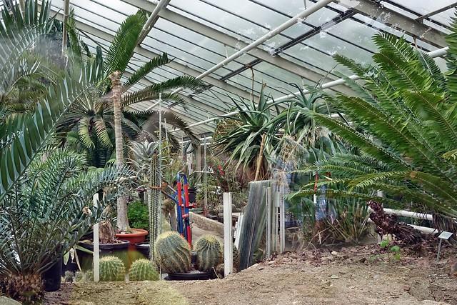 im Botanischen Garten der Stadt Köln - Flora - tut sich was