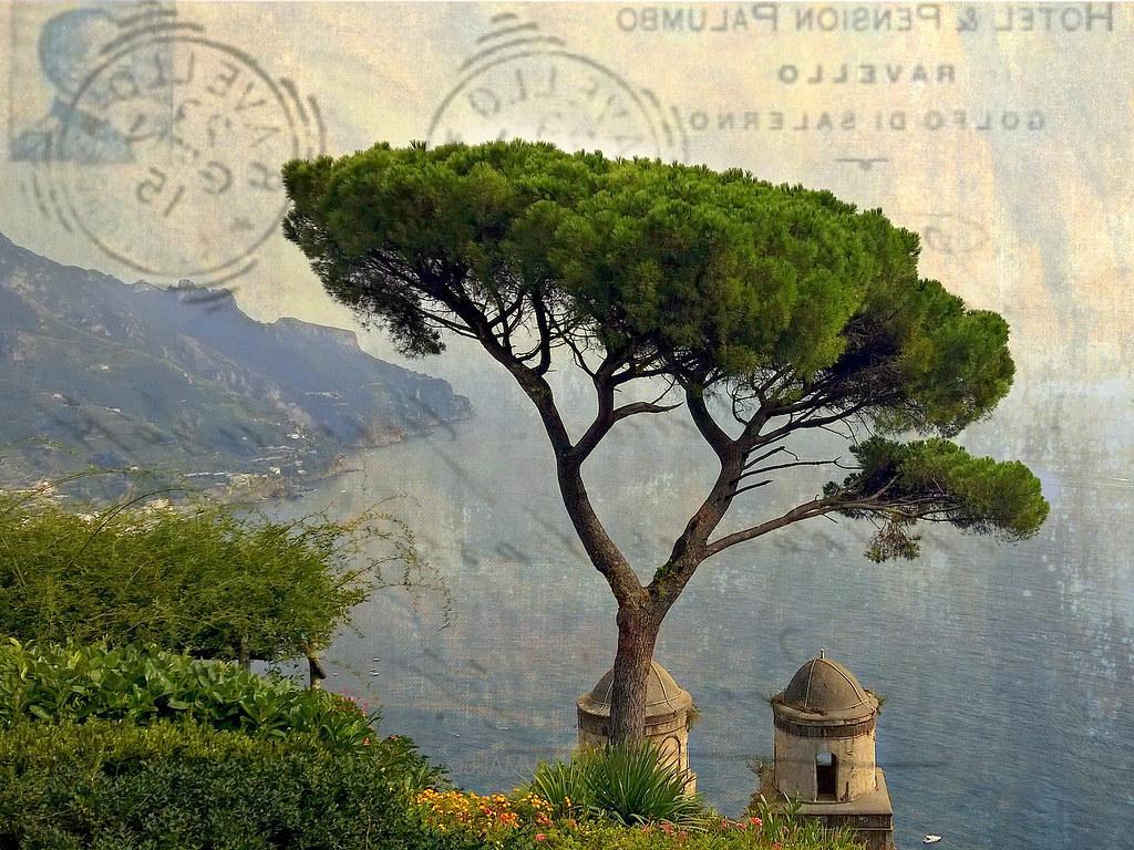 Stone Pine Or Umbrella Pine Pinus Pinea At Ravello Flickr