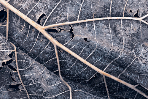 Organic Winter Decay - HDR Texture | by Bold Frontiers