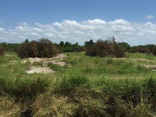 Abandoned groves