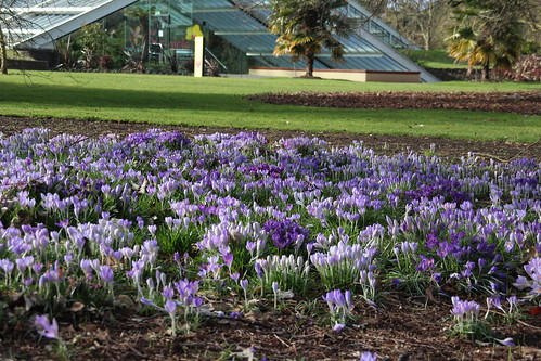 Kew Mar 1 2015 | by RachelC