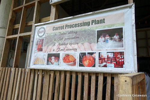 carrot-processing-philippines.jpg