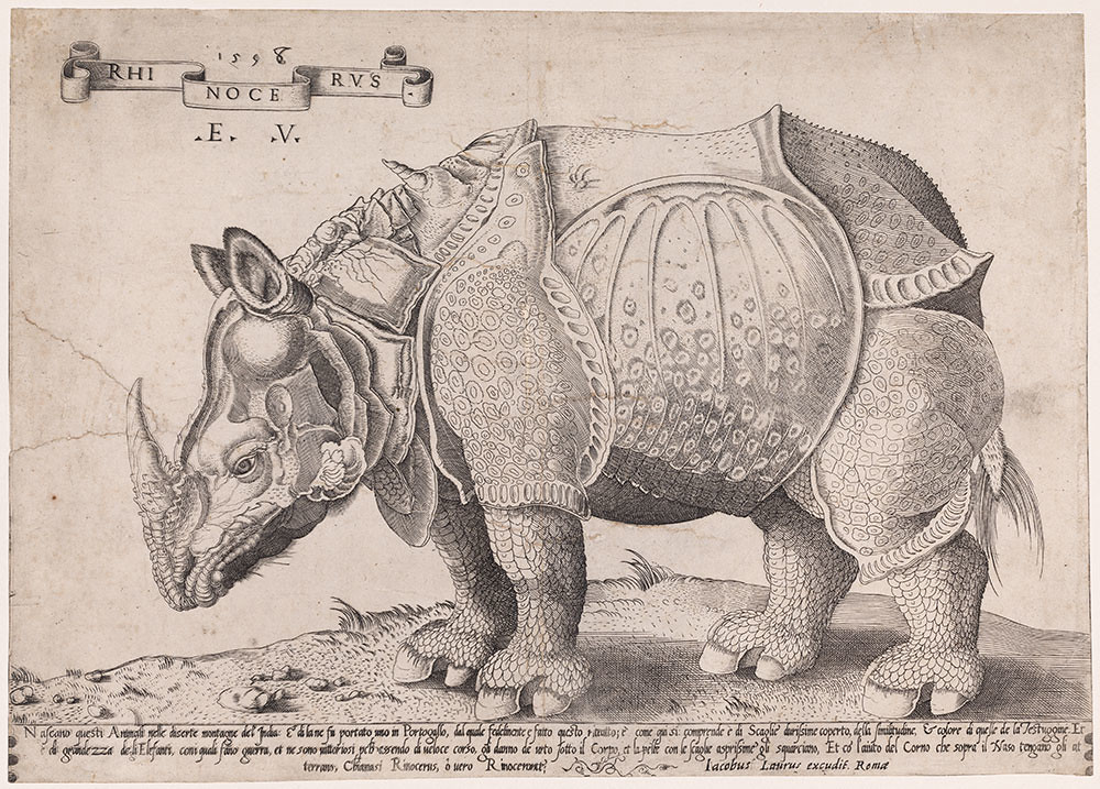 A Rhinoceros, Enea Vico (after Albrecht Dürer), 1558 (C) UCL Art Museum, University College London