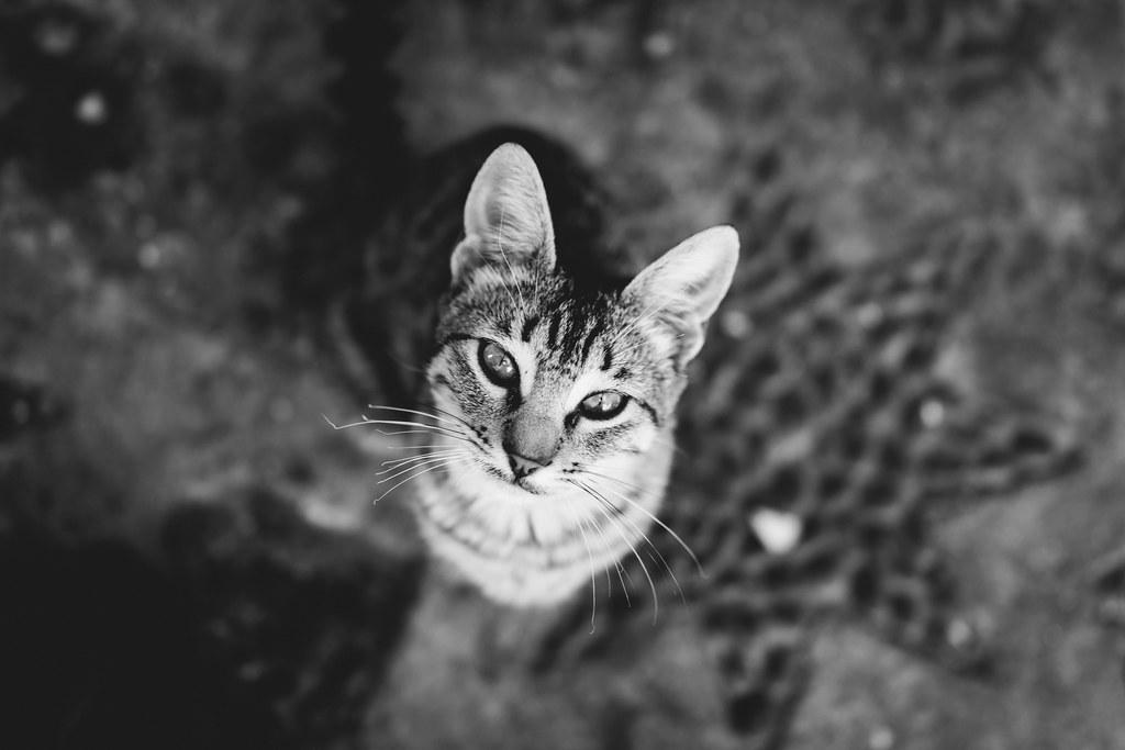 Benson White Cat Missing From Fairlight Uk