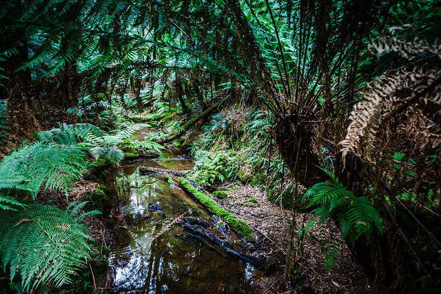 Great Otway National Park Flickr Photo Sharing