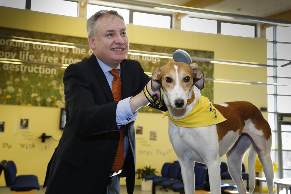 Dog Microchipping Free Uk