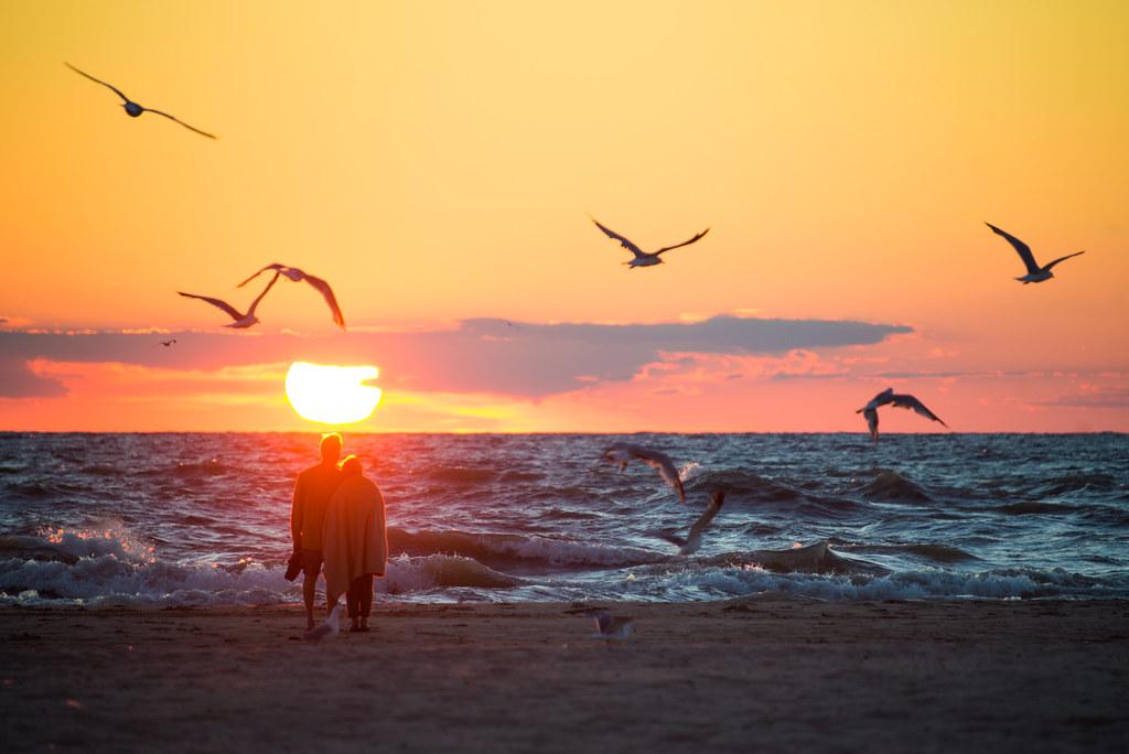 Afbeeldingsresultaat voor couple watching birds
