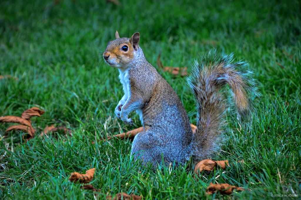 Squirrels At Carl S English Jr Botanical Gardens Flickr