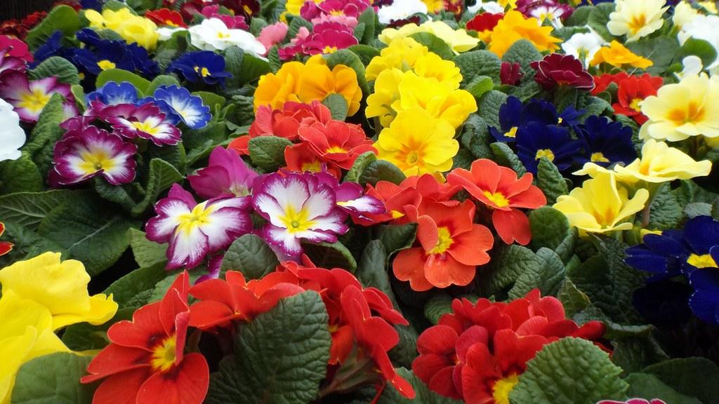 أسماء الورود و الأزهار بالانجليزي
