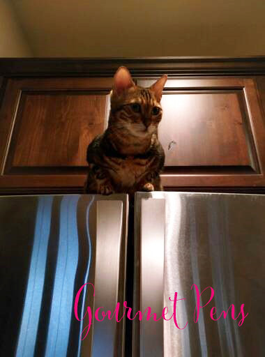Whiskers & Paws April 2017 Edition 4