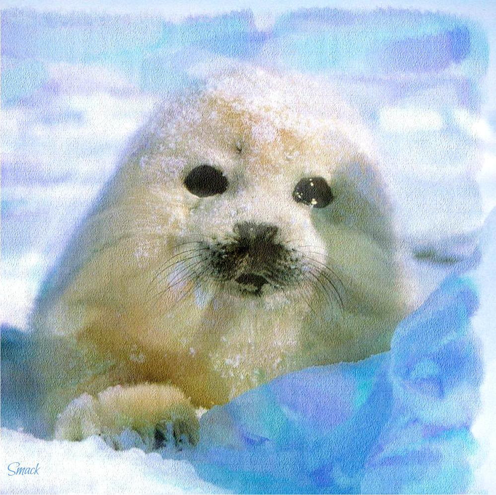 harp seal pup digital watercolors painting gmx photopain flickr