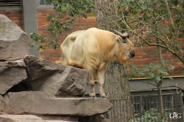 Besuch Tierpark Friedrichsfelde 07.08.1675