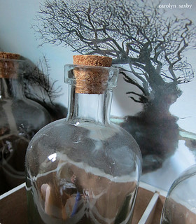 nature in a bottle | by Carolyn Saxby