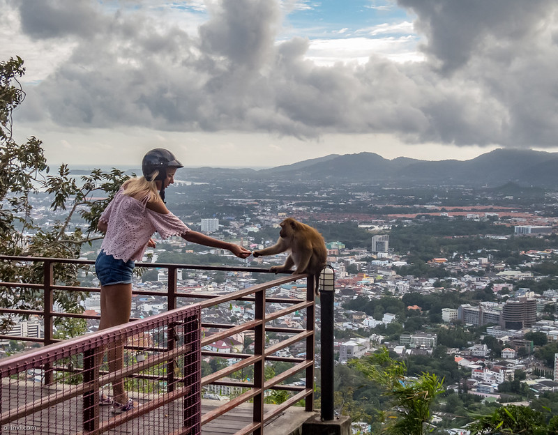Tourist feeding monkeys at Khao To sae or Monkey hill in Phuket town