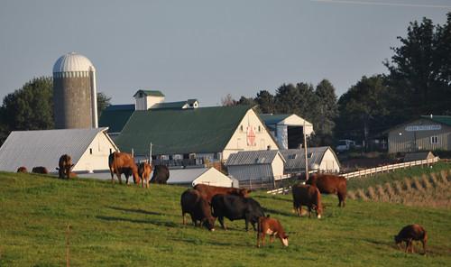 Farm Sweet Farm near Iowa