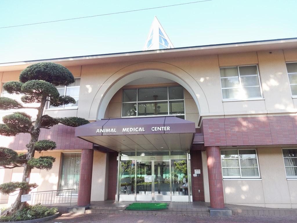「日本大学動物病院」の画像検索結果