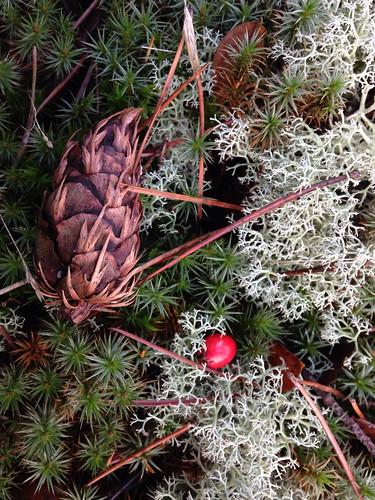 Winter festivities Bois d'Hiver