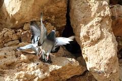 fight-&-flight