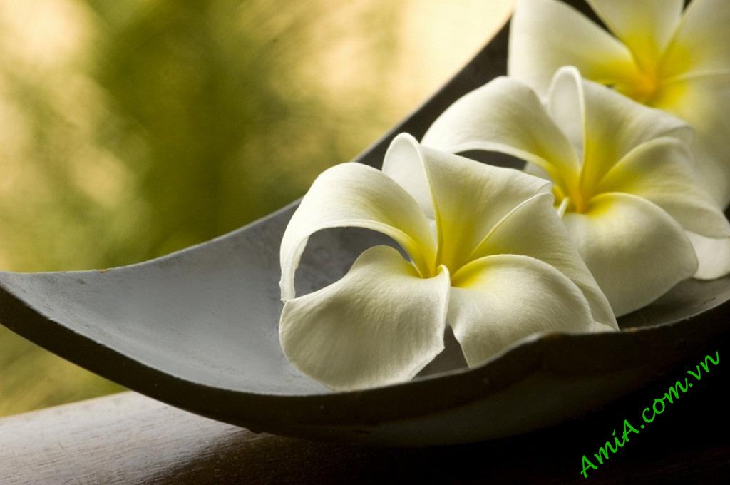 Hinh anh dep trang tri spa hoa dai AmiA