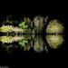 Island Of Light 2 - Syon Park Gardens London Enchanted Woodland by Simon Hadleigh-Sparks