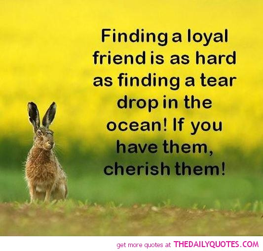 Loyalty And Friendship Quotes Loyalty And Friendship Quote Flickr Extraordinary Quotes About Loyalty And Friendship
