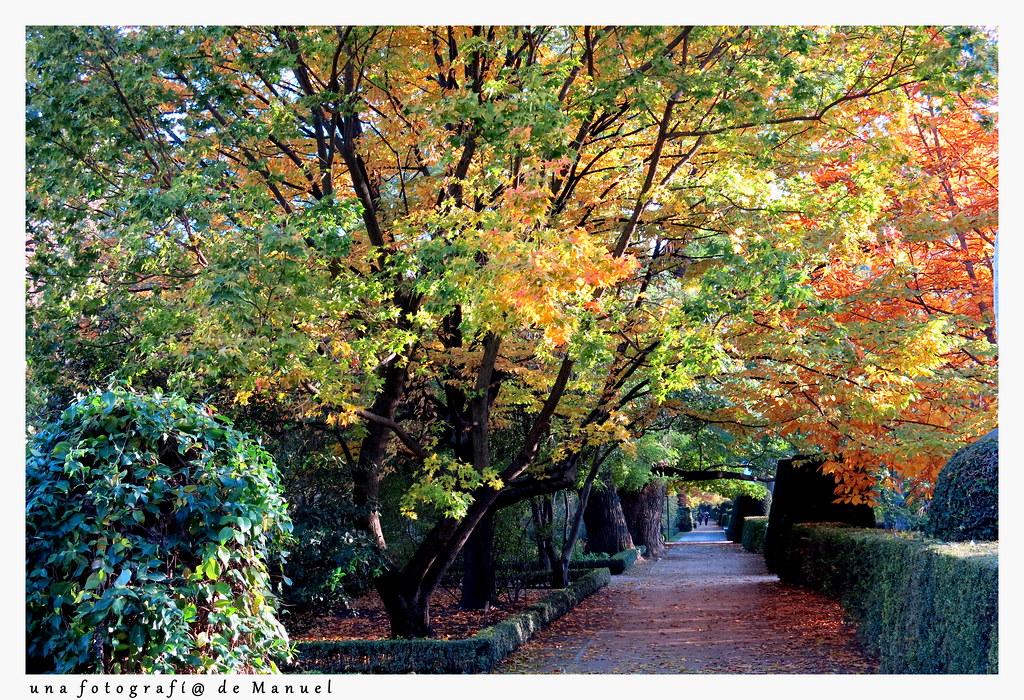 Una tarde de noviembre en el jard n bot nico de madrid 022 for Jardin botanico madrid conciertos