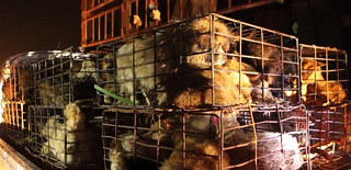 800 dogs were rescued on site in China's Sichuan province 5 | by Animals Asia