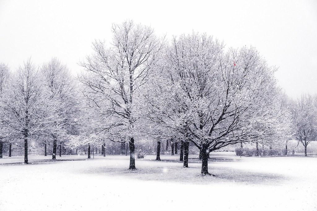 Snow Trees Snow Trees Rasmus Sonderborg Flickr Tree And Sno