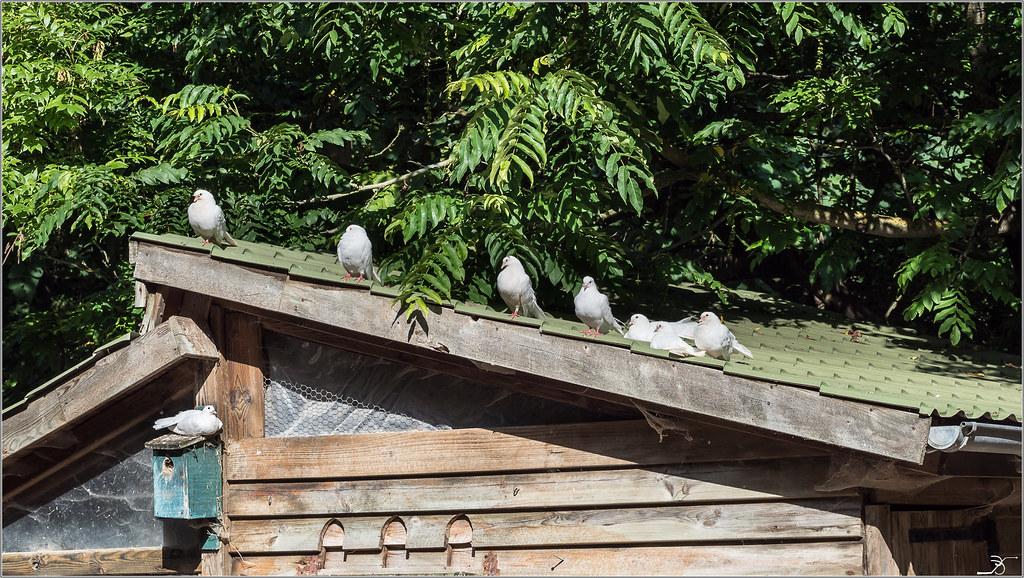 Moulin à Tan : oiseaux 28782829732_1f35d2fc2d_b