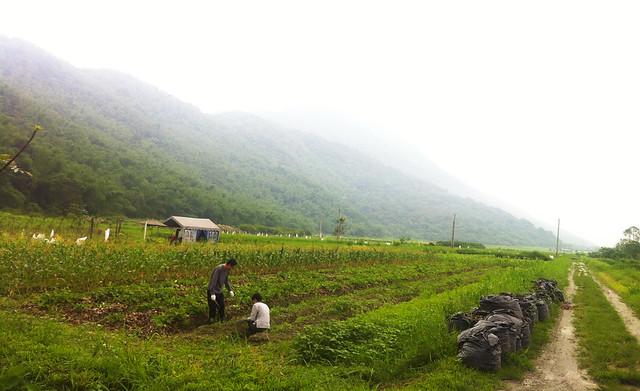 菜舖子農場就在山旁。攝影:許靜娟。