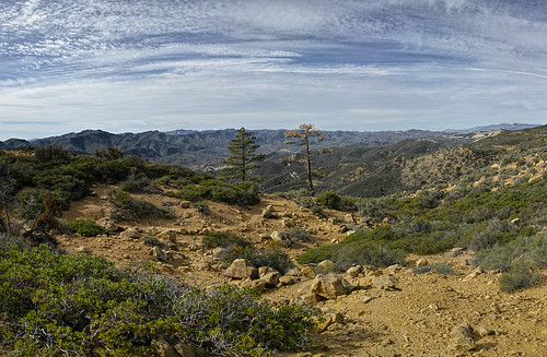 Panorama: The Chorro Grande trail Sentinel Trees, January 22, 2015