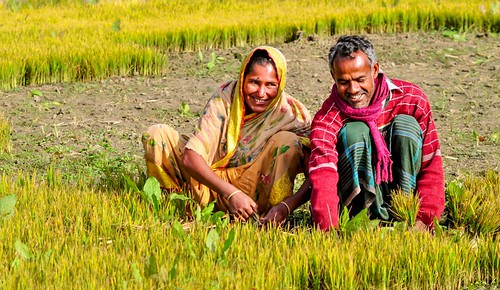 Working together in their field | by IFPRI